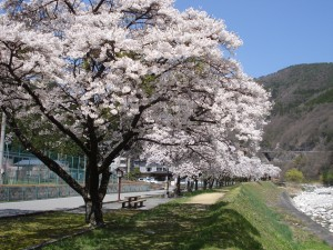 引用:http://achinosato-hirugami.com/info/kaika/